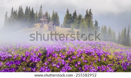 High in the mountains, in the alpine fields above beech and spruce forests is the most mountainous Carpathian wooden church - where the summer conduct ceremonies for the shepherds of sheep and cows. - stock photo