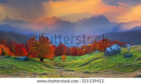 High in the mountains located Gutsulschiny tract with ancient village of shepherds, where shepherds live in the summer, cows and horses, and there is no one in the fall, only gold slopes forests