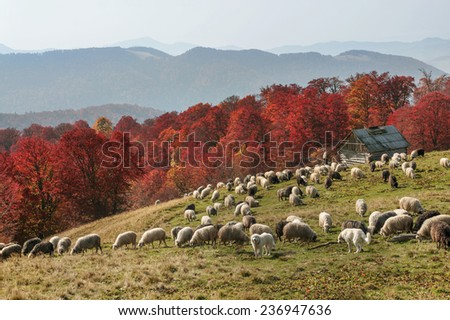 High in the wild mountains located monastery- church shepherds of sheep, cows and horses in  Carpathian Mountains. Natural reserves, but accessible  experienced hikers and climbers during cold weather - stock photo