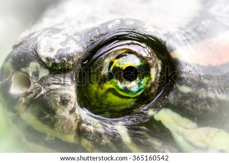 High magnification macro of a turtle's eye