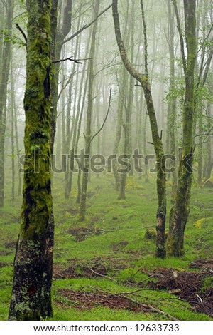 High mountain woods in a spring morning in the national park of Peneda Geres in the north of Portugal
