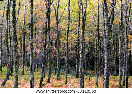 High mountain woods of northern Portugal with the colors of early autumn (National Park of Peneda-Geres)