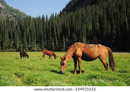 High mountains in Asia with wild horses, Karakol National park, Tian Shan, Kyrgyzstan - stock photo