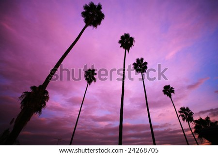 High palm trees over beautiful pink sunset sky - stock photo