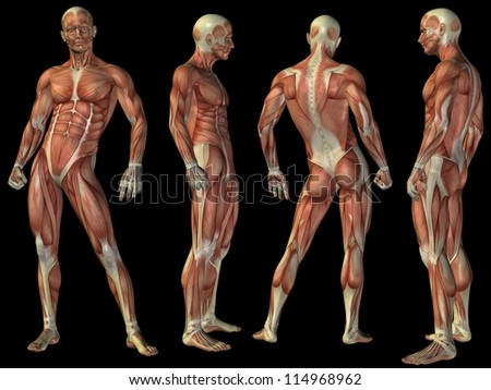 High resolution concept or conceptual human or man 3D anatomy body with muscle isolated on black background as a metaphor to medicine,sport,male,muscular,medical,health,biology or fitness group or set - stock photo