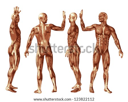 High resolution concept or conceptual human or man 3D anatomy body with muscle isolated on white background as a metaphor to medicine,sport,male,muscular,medical,health,biology or fitness group or set
