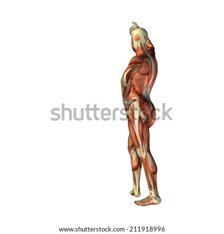 High resolution concept or conceptual human or man 3D anatomy body with muscle isolated on white background, metaphor to medicine, sport, male, muscular, medical, health, biology, fitness group or set