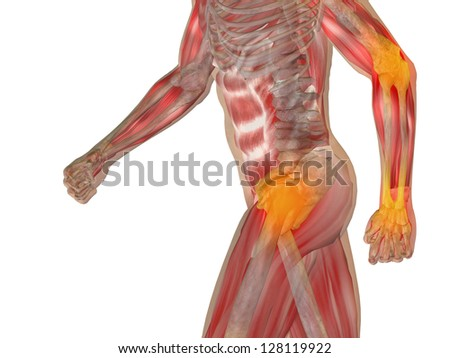 High resolution conceptual 3D human ideal for anatomy,medicine and health designs, isolated on white background.It is a man made of a skeleton and a transparent body as in a x-ray - stock photo