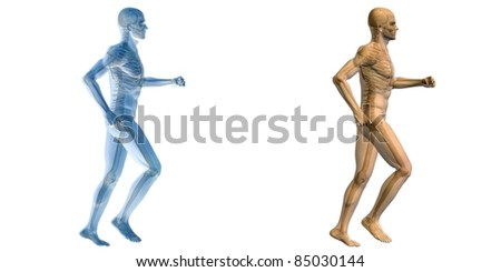 High resolution conceptual 3D humans ideal for anatomy,medicine and health designs, isolated on white background. It is a man made of a skeleton and a transparent blue body as in a x-ray
