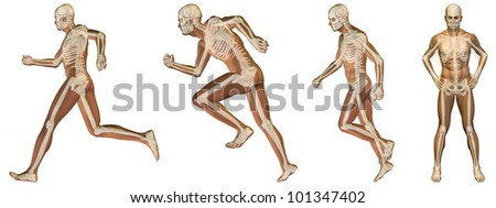 High resolution conceptual man anatomy illustration on white background for medical,medicine,health,rheumatism,osteoporosis,muscle,ache,arthritis,inflammation,painful or bones design - stock photo