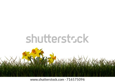 High resolution green,fresh and natural 3d grass field or lawn isolated on white background