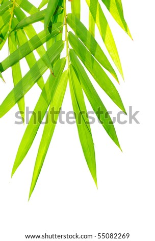 High resolution image of  bamboo-leaves isolated on a white background - stock photo