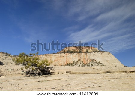 High sandstone plateau in Zion National Park, Utah - stock photo