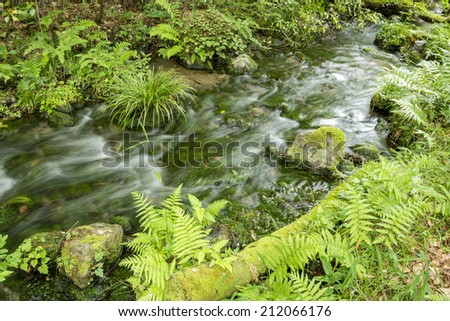 High transparency brook that lush green aquatic plants - stock photo