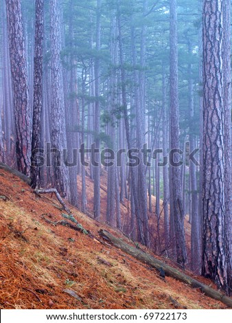 High tree during dense fog. Natural composition - stock photo