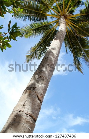 High Tropical Palm Tree in Perspective