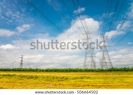 High voltage lines and power pylons in a yellow rice field agricultural landscape on a sunny day with the blue sky
