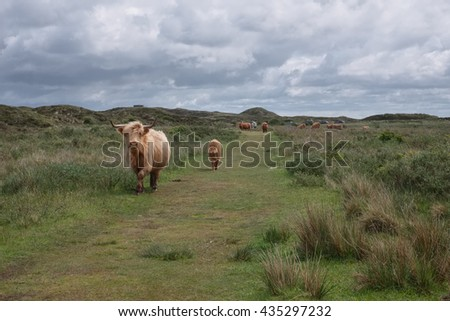 Highland cow and calf under cloudy sky
