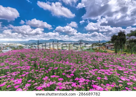 Highland Park Da lat Flower on a sunny morning, flower field immense hilltop village far away from the high areas, photos adorn the beautiful cloudy sky makes the image more vitality. - stock photo