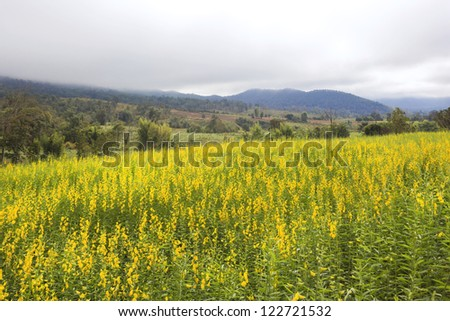 Highland with flower meadow (Indian hemp, Madras hemp) - stock photo