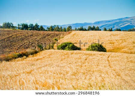 HIghlands of Ecuador Landscape with crop Fields - stock photo