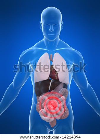 highlighted intestines - stock photo