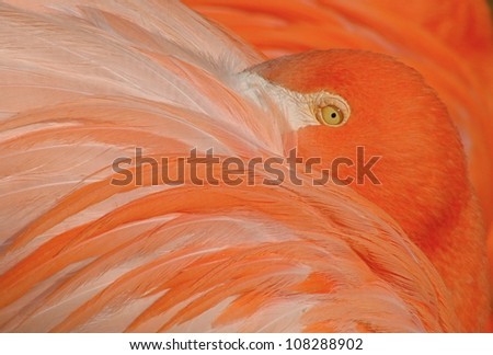 Highly Detailed Close-up of a Pink Flamingo - stock photo