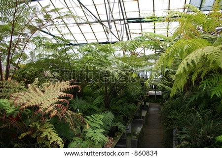 Highly textures Vibrant Green leaves.  Ferns in the Botanical Gardens - Edinburgh - stock photo