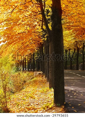 Highway, passing between autumn trees with yellow leaves - stock photo