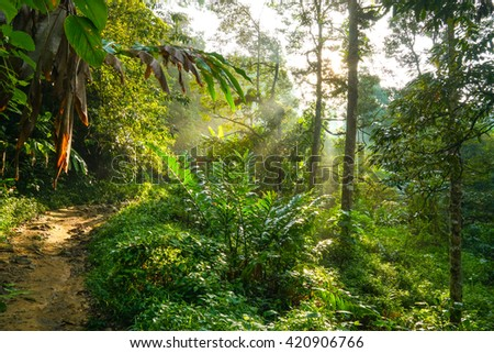 Hiking in a tropical forest in Malaysia
