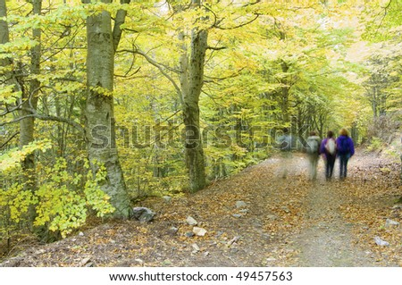 Hiking in beech forest, Moncayo natural park, saragossa, Spain