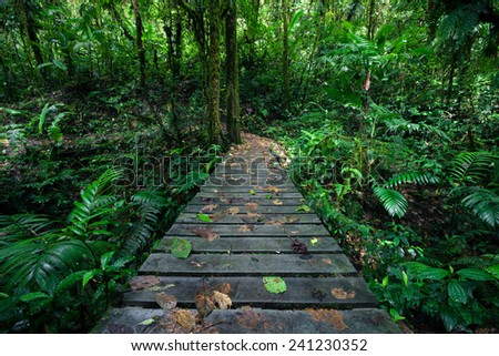 Hiking in Costa Rica's rainforest - stock photo