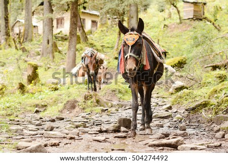 Donkey Carries Heavy Load Stock Images, Royalty-Free ...