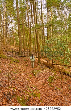 Hiking into the Forested Hills in Cumberland Gap National Park in Kentucky - stock photo