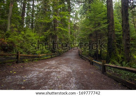 Hiking path leads through beautiful green old growth forest. - stock photo