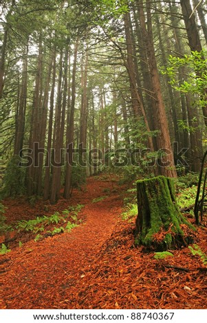 Hiking path through lush temperate rain forest and redwood trees in Northern California - stock photo