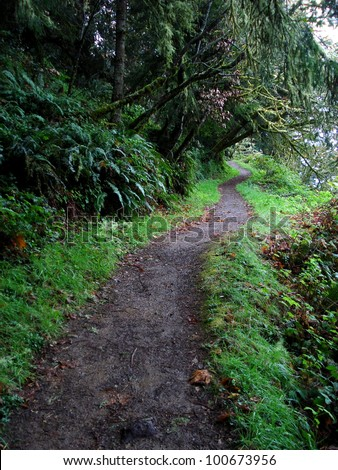 Hiking path winding through ferns, grass, and trees (Northern California, USA). Cool weather, gentle slope, easy hike or walk. - stock photo