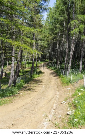hiking s curve path in forrest - stock photo