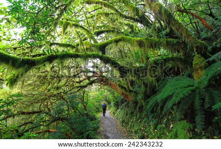 Hiking Through the Lush Forests of Fiordland, New Zealand - stock photo