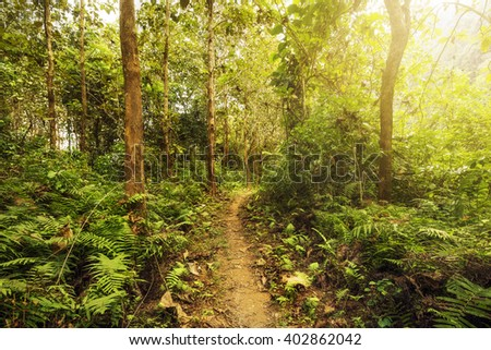 Hiking trail in lush green forest with sunlight shinning through the trees. - stock photo