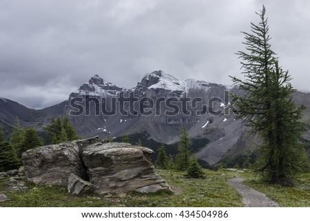 Hiking trail in Sunshine Meadows, Alberta, Canada. - stock photo