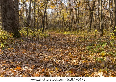 Hiking Trail In The Woods In Autumn