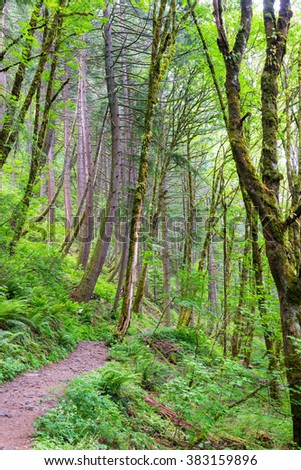 Hiking trail leading through a forest in the Columbia River Gorge in Oregon - stock photo