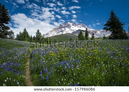Hiking trail leading to Mt. hood in the Oregon Cascades - stock photo