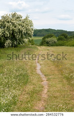 Hiking trail through fields with some flowers aside.  - stock photo