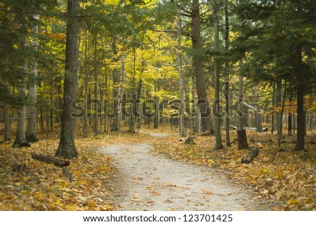 hiking trail through forest during colorful autumn season at potawatomi state park in door county of wisconsin