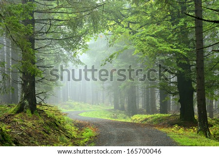 Hiking Trail through Natural Foggy Spruce Tree Forest - stock photo