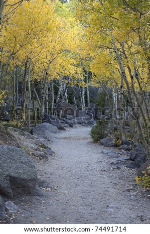 Hiking trail through yellow colored Aspen trees in Rocky Mountain National Park