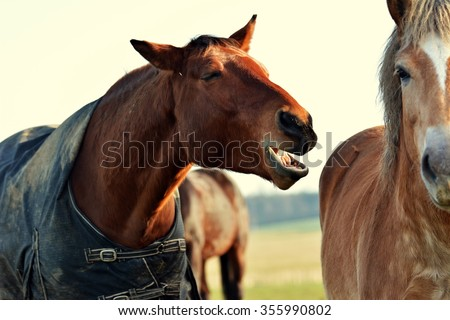 Hilarious horse on pasture