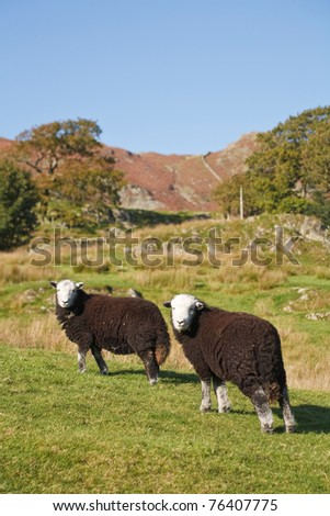 Hill farming - stock photo